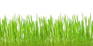 Groen gras dat op witte achtergrond wordt geïsoleerdg Stock Foto