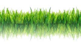 Groen gras dat op witte achtergrond wordt geïsoleerdg Royalty-vrije Stock Foto