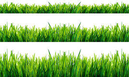 Groen gras dat op witte achtergrond wordt geïsoleerdg Stock Afbeeldingen
