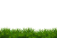 Groen gras dat op witte achtergrond wordt geïsoleerdg Stock Afbeelding
