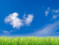 Groen gras dat tegen een blauwe hemel wordt geplaatst Stock Foto's