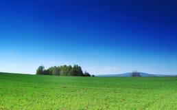 Groen gras, de blauwe hemel en de witte wolken royalty-vrije stock afbeeldingen