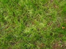 Groen gras in de tuin stock afbeeldingen
