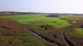 Groen gras in de weiden met schoven in de herfst Luchtonderzoek stock videobeelden