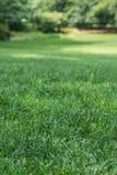Groen gras in de zomer Royalty-vrije Stock Fotografie