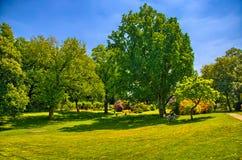 Groen gras in een zonnig park, het Gezoem van Begren op Stock Foto