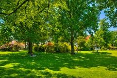 Groen gras in een zonnig park, het Gezoem van Begren op Royalty-vrije Stock Foto