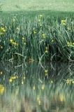 Groen gras en bezinning over het water Royalty-vrije Stock Afbeelding