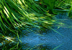 Groen gras en blauw water Stock Afbeelding