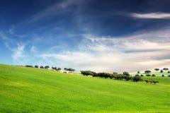 Groen Gras en blauwe hemel Stock Afbeelding