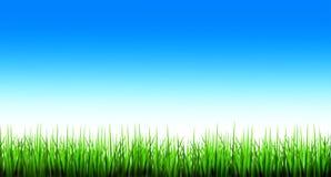 Groen gras en blauwe hemel Stock Foto's
