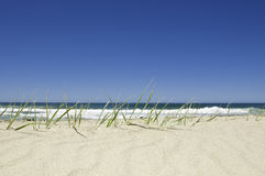 Groen gras en blauwe hemel. Royalty-vrije Stock Afbeeldingen