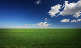 Groen gras en blauwe hemel stock foto