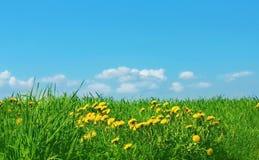 Groen gras en blauwe hemel Royalty-vrije Stock Afbeelding