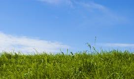 Groen gras en blauwe hemel Royalty-vrije Stock Foto's