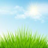 Groen gras en blauwe hemel Vector illustratie Stock Foto's