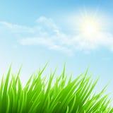 Groen gras en blauwe hemel Vector illustratie Stock Fotografie