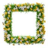 Groen gras en bloemen vierkant kader Stock Afbeelding