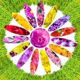 Groen gras en collage van bloemen Royalty-vrije Stock Fotografie