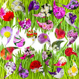 Groen gras en collage van flowers.background Stock Afbeeldingen