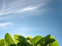 Groen gras en de blauwe hemel royalty-vrije stock afbeeldingen