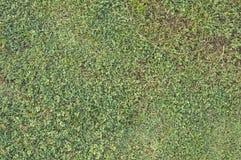 Groen gras en droge grasachtergrond Royalty-vrije Stock Foto's