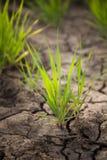 Groen gras en droge grond Royalty-vrije Stock Foto's