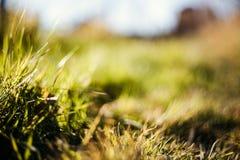 Groen gras en droog gras Stock Afbeeldingen