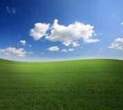 groen gras en een blauwe hemel stock afbeeldingen
