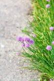 Groen gras en roze bloemen aan kant van weg Royalty-vrije Stock Afbeelding