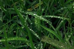 Groen gras en waterdalingen en insecto op bovenkant Royalty-vrije Stock Foto's