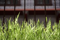 Groen gras in gekooid venster royalty-vrije stock foto's