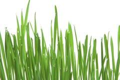 Groen gras, horizontaal formaat Royalty-vrije Stock Fotografie