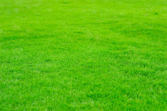 Groen Gras in ingediend golf Royalty-vrije Stock Foto's