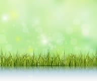 Groen gras met bezinning over watervloer Bokeheffect op lichtgroene en blauwe pastelkleurachtergrond Stock Afbeelding