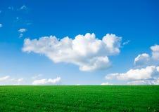 Groen gras met blauwe hemel stock afbeeldingen