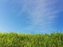 Groen gras met blauwe hemel Royalty-vrije Stock Afbeeldingen