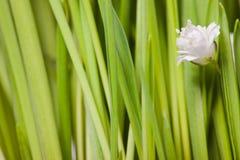 Groen gras met bloemen Stock Afbeeldingen