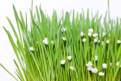 Groen gras met bloemen Stock Foto
