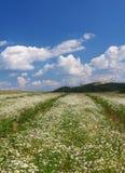 Groen gras met bloemen Stock Foto's