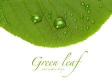Groen gras met dalingen stock foto