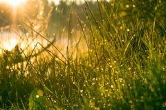Groen gras met dauwdalingen Stock Foto