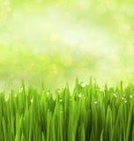 Groen Gras met de Dalingen van het Water/Abstracte Achtergrond Stock Fotografie