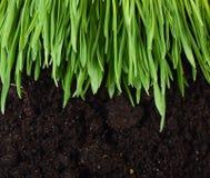 Groen gras met een grond Royalty-vrije Stock Afbeelding