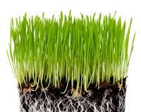 Groen gras met grond Stock Afbeeldingen