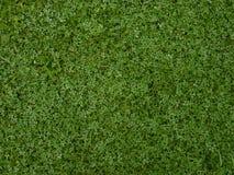 Groen gras met klaver Stock Afbeeldingen