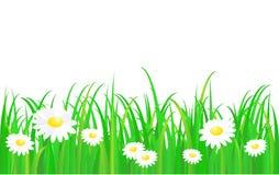Groen gras met madeliefje royalty-vrije illustratie
