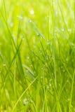 Groen gras met ochtenddauw Stock Foto