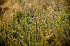 Groen Gras met Regendruppels Stock Foto