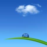 Groen gras met waterdrop tegen blauwe hemel Stock Afbeeldingen